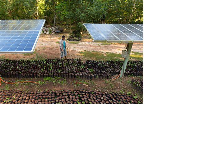 Elizar Samuel Gamara molhando mudas de plantas sob paineis solares que geram eletricidade para a bomba de água na Reserva Biocultural Kaxil Kiuic.
