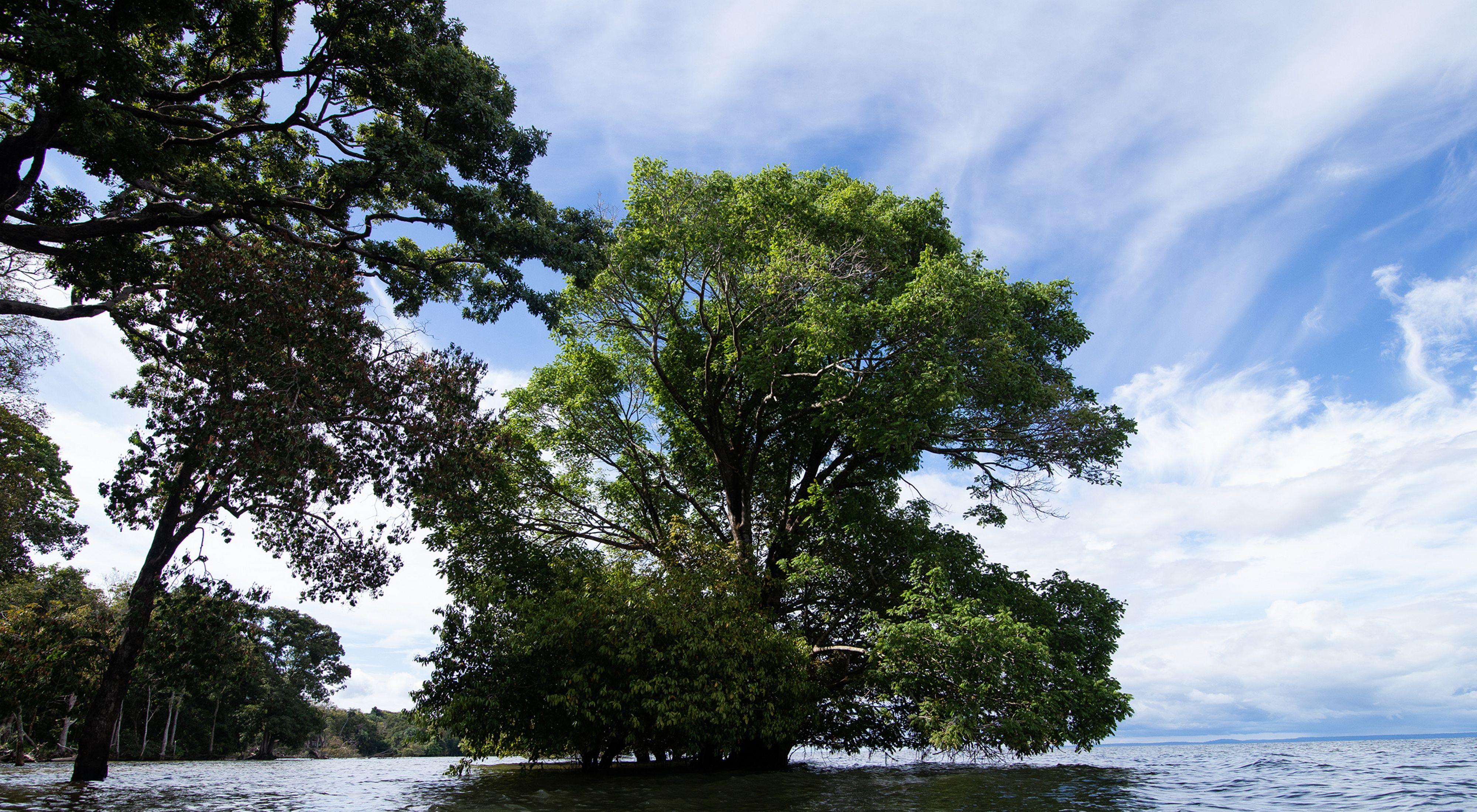 Bacia do Tapajós, na Amazônia.