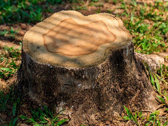 A derrubada de floresta para expandir áreas de produção é o maior desafio para proteção da natureza nos biomas brasileiros.