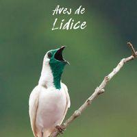 Capa do guia de aves desenvolvido com apoio da TNC indicando espécies que vivem na região de Lídice, distrito de Rio Claro-RJ.