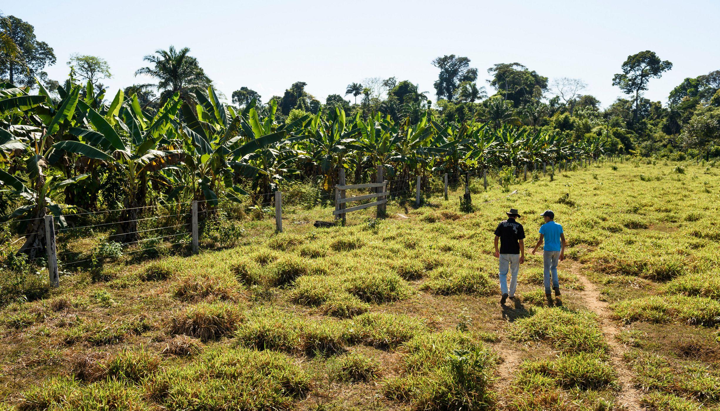Pequenos produtores na Amazônia