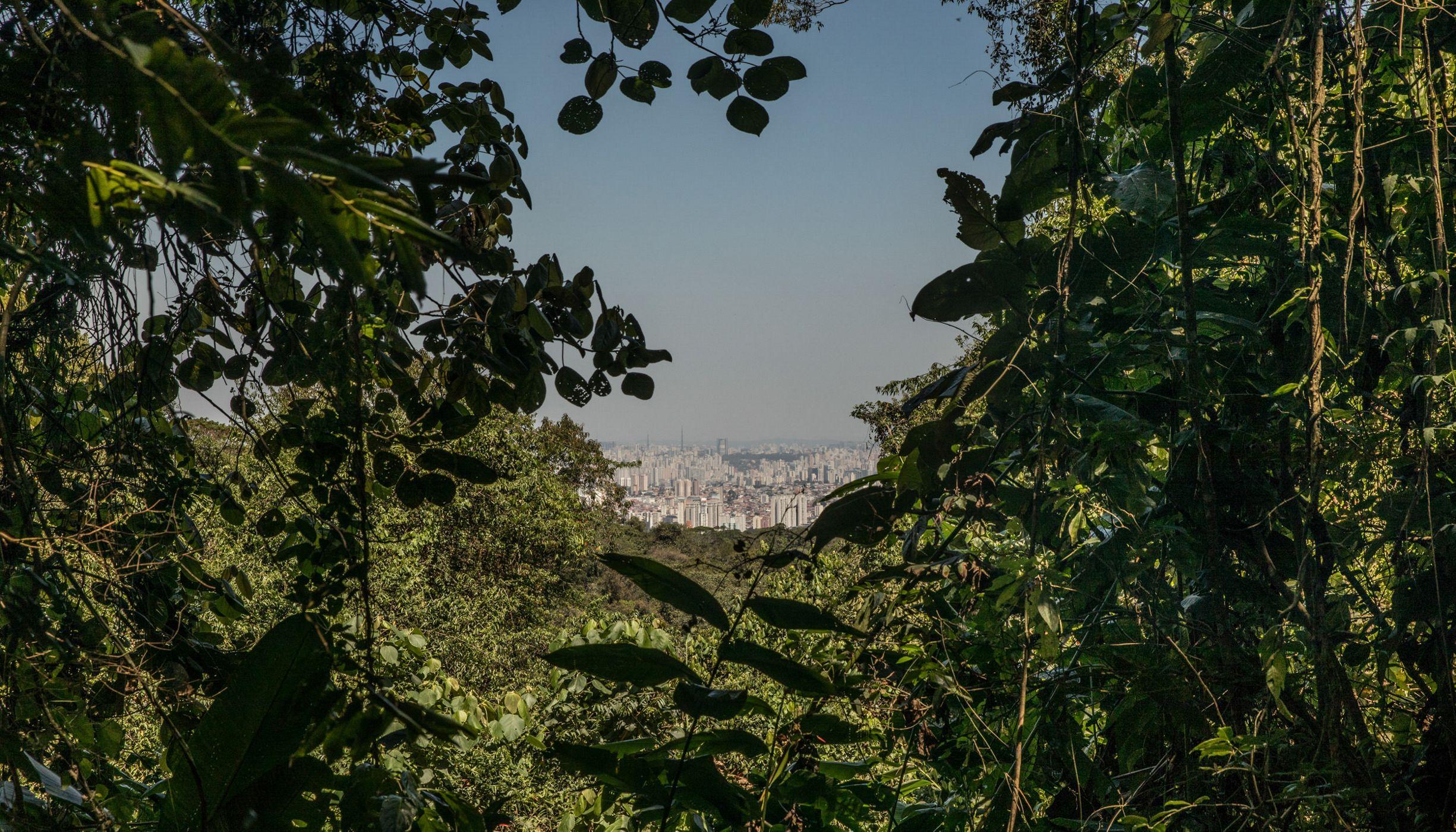 Cidade de São Paulo e uma nuvem de poluição vista do Parque Estadual da Cantareira.