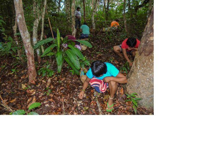 Mulheres indígenas do povo Xavante coletando sementes na Terra Indígena Marawatsédé, no estado do Mato Grosso.