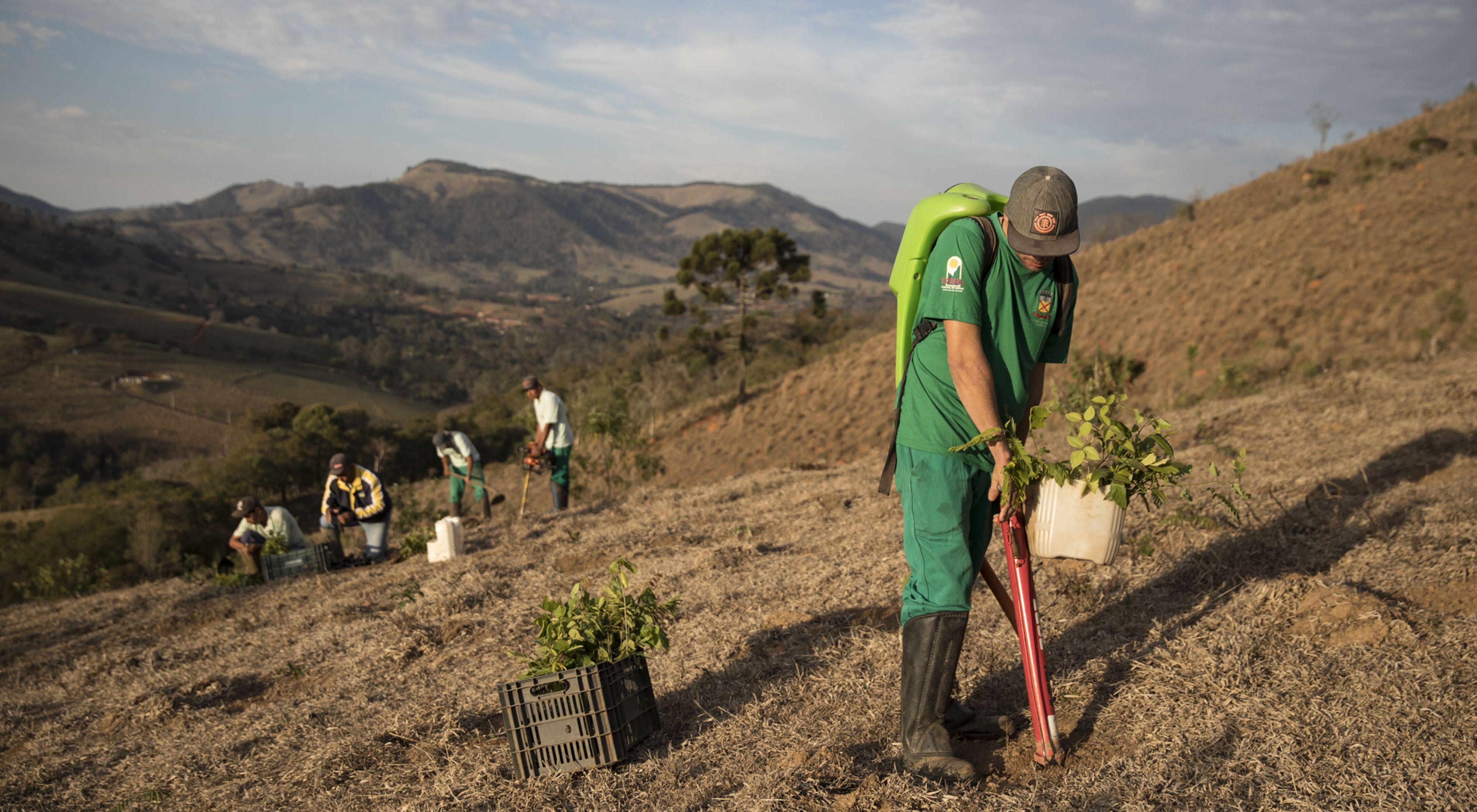 Equipe do projeto Conservador das Águas, da prefeitura de Extrema-MG, em atividade de restauração em plantio total, plantando em média mais de mil mudas por dia.