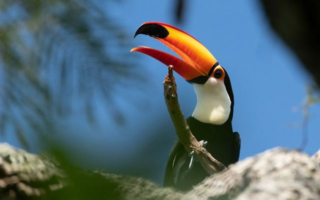 a close up of a toucan in a tree