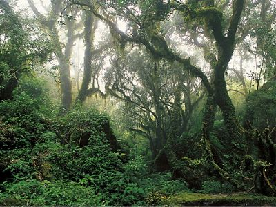 a photo of a lush tropical forest with lots of greenery