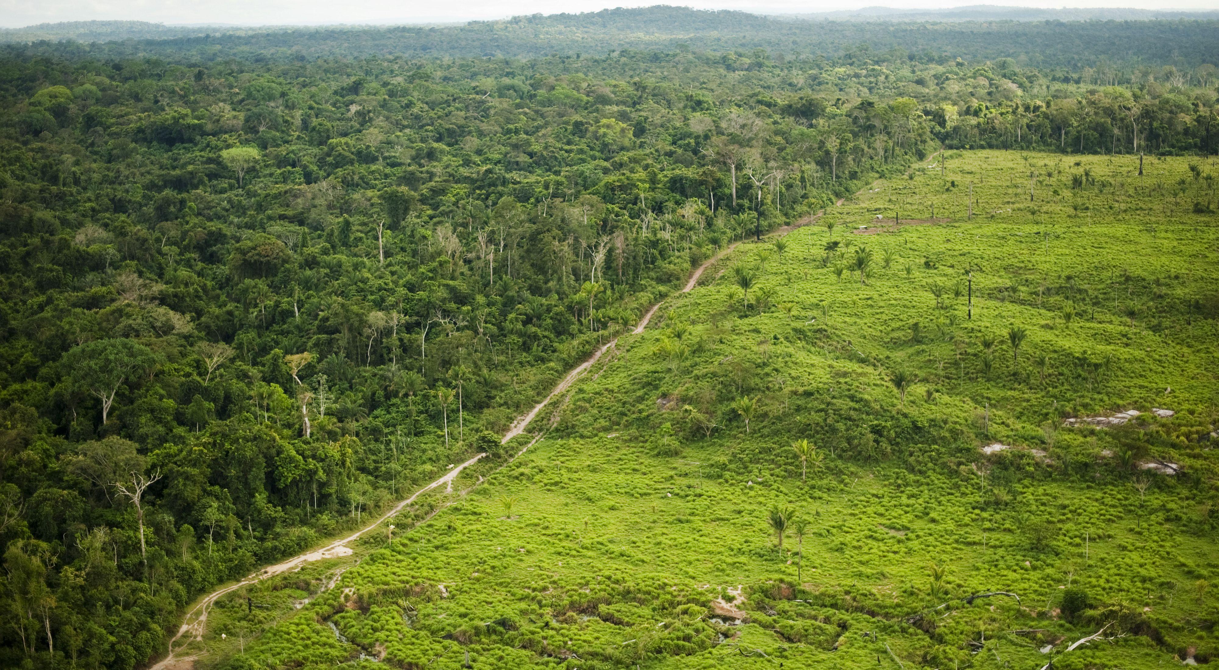 A maior parte do desmatamento acontece em áreas privadas, geralmente próximo de fronteiras de Unidades de Conservação e Terras Indígenas.