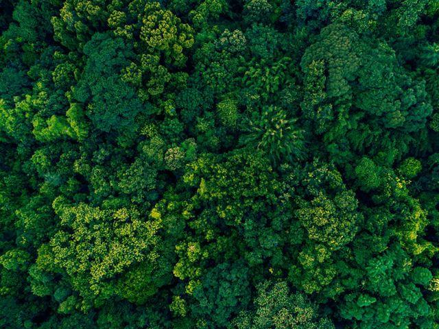 A harmonia entre as árvores, cores e texturas da floresta.