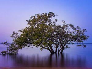 Árvore em meio a floresta amazônica