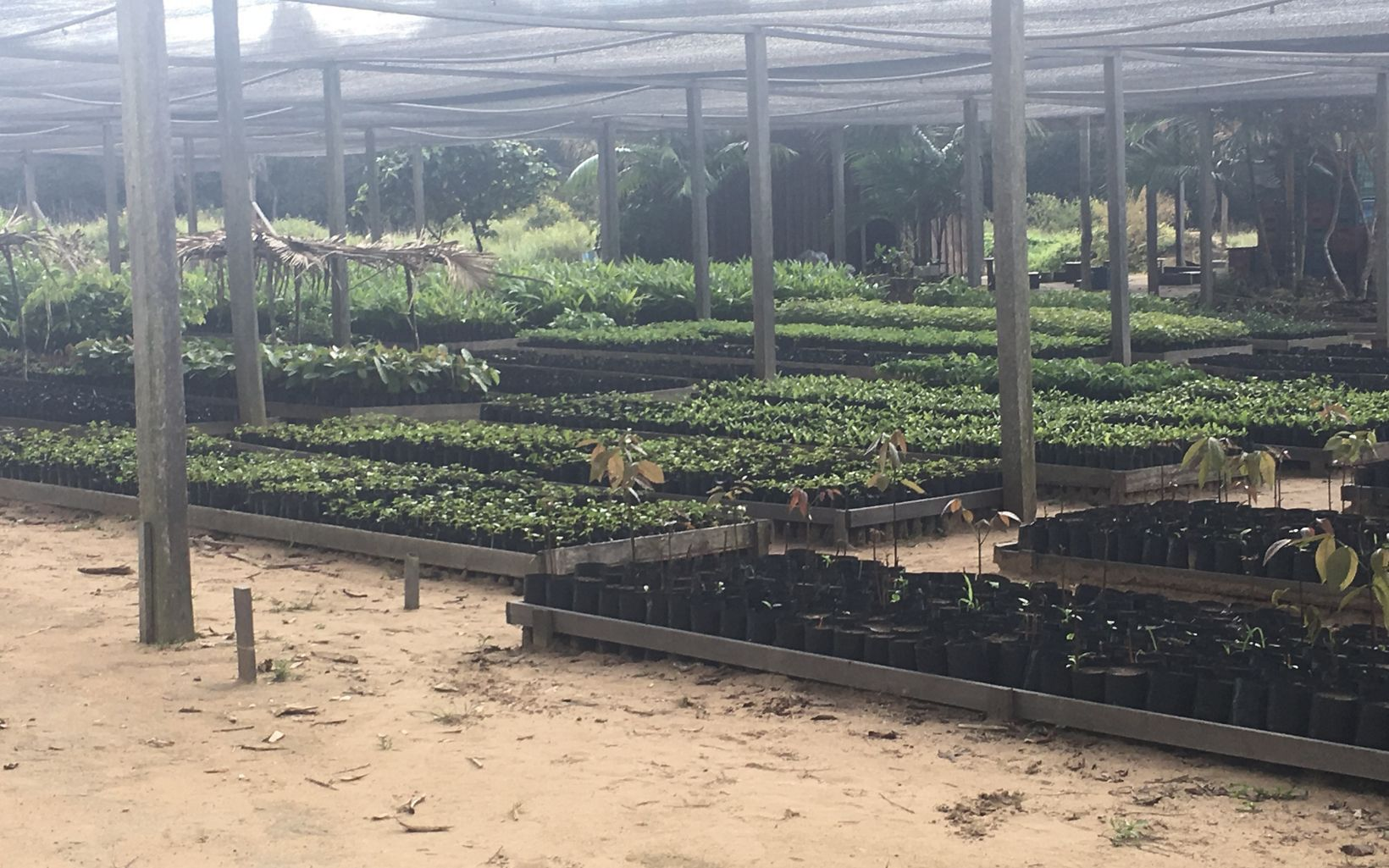 Viveiro de mudas no Centro Experimental Floresta Ativa (CEFA), na Reserva Extrativista Tapajós-Arapiuns