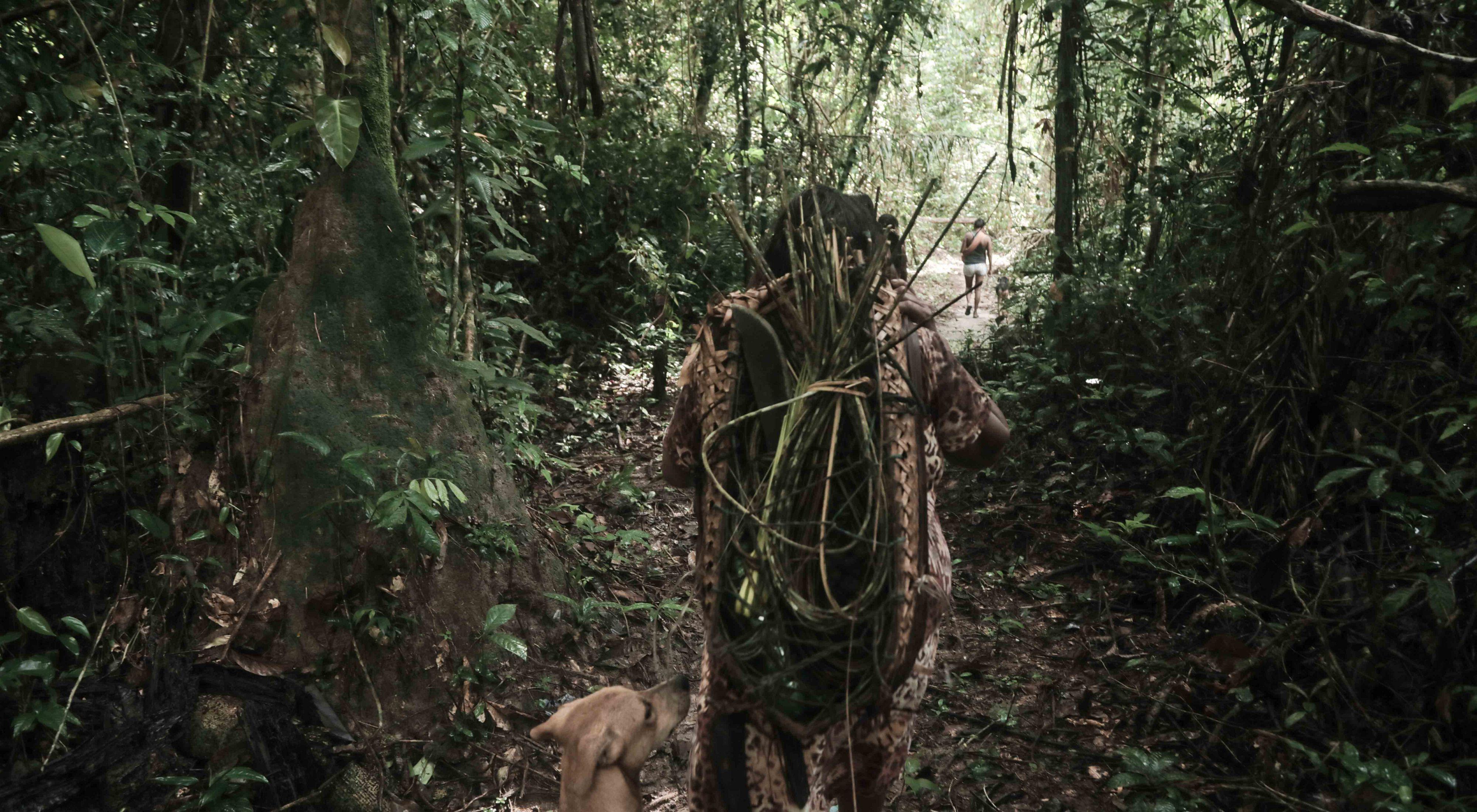 Indígena Parakanã em expedição para coletar matéria-prima para artesanato produzido pela comunidade na Terra Indígena Apyterewa, no sul do Pará.