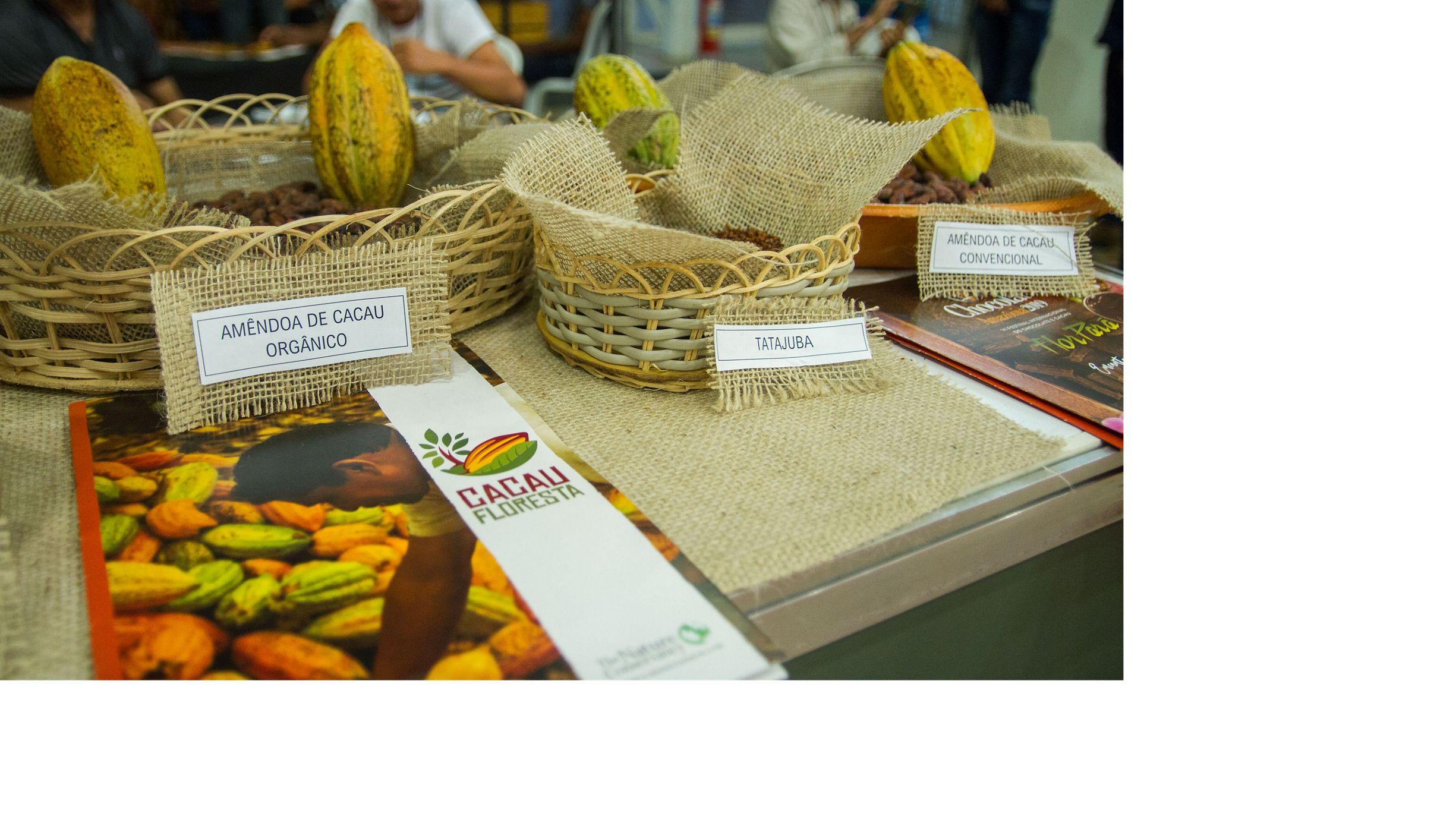 Agricultores e especialistas puderam trocar experiências sobre agroflorestas de cacau durante o Festival do Chocolate 2019.
