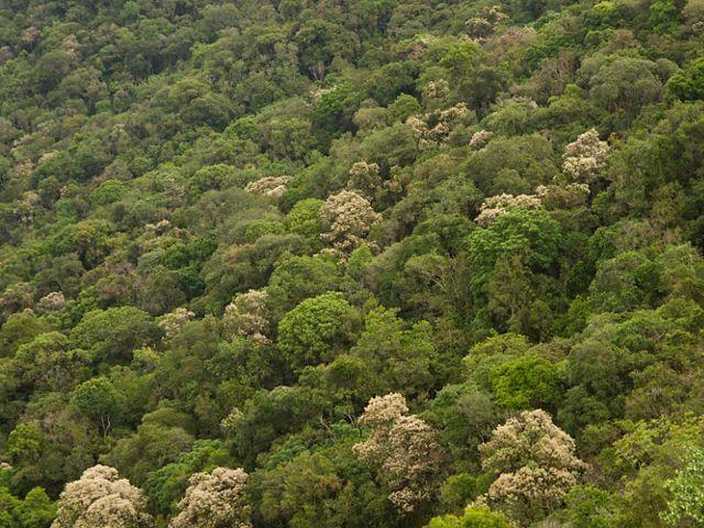 Imagem aérea de floresta nativa em Extrema-MG.