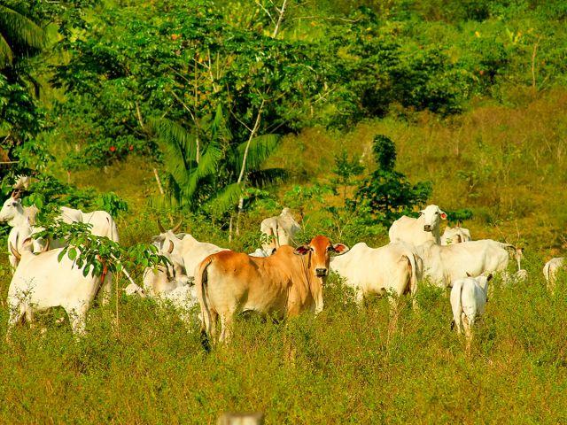 É possível aumentar a produtividade agropecuária sem abrir novas áreas de produção. Para isso é preciso investir em inovação e boas práticas para pecuária e agricultura.
