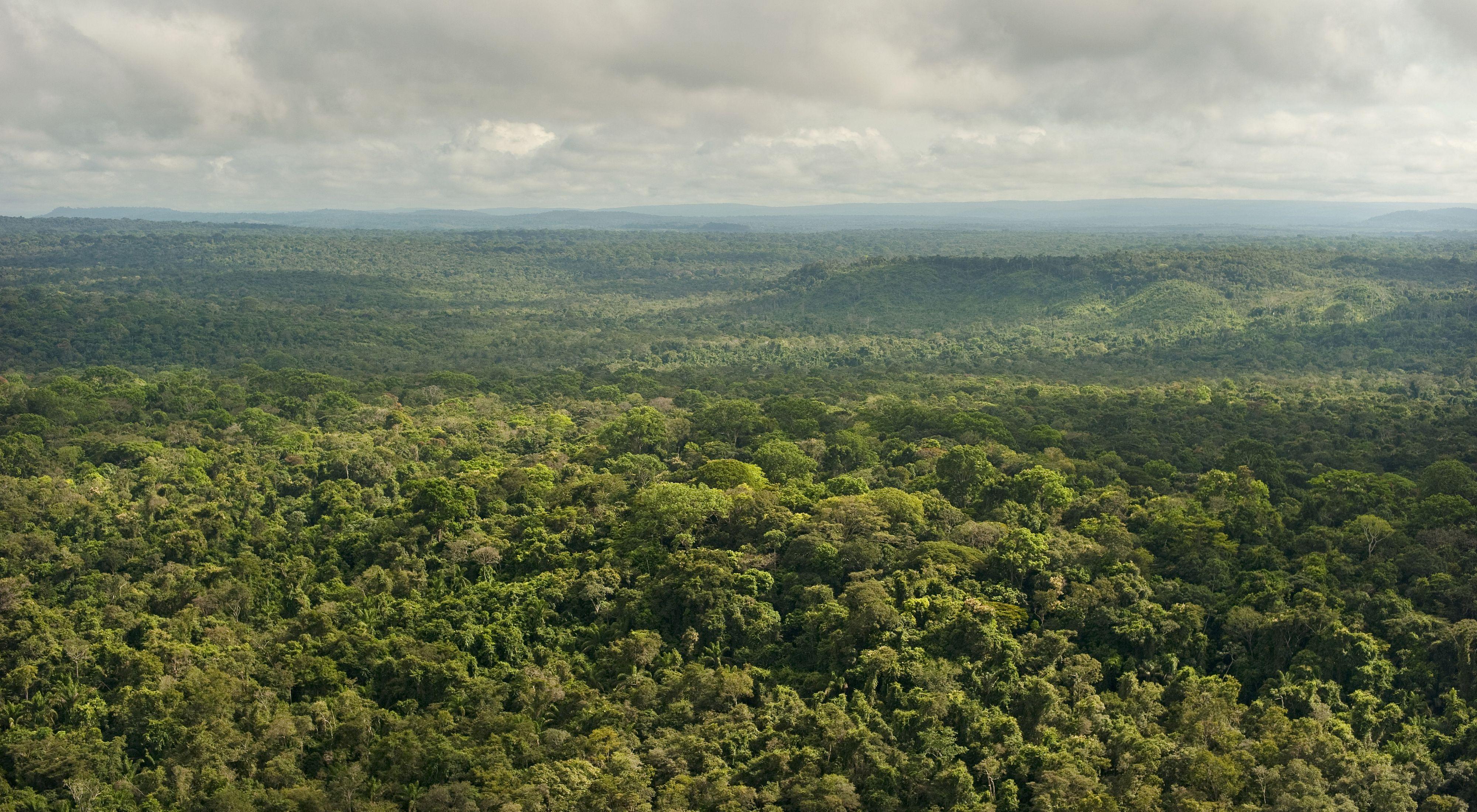 Vista aérea de floresta preservada em São Félix do Xingu-PA