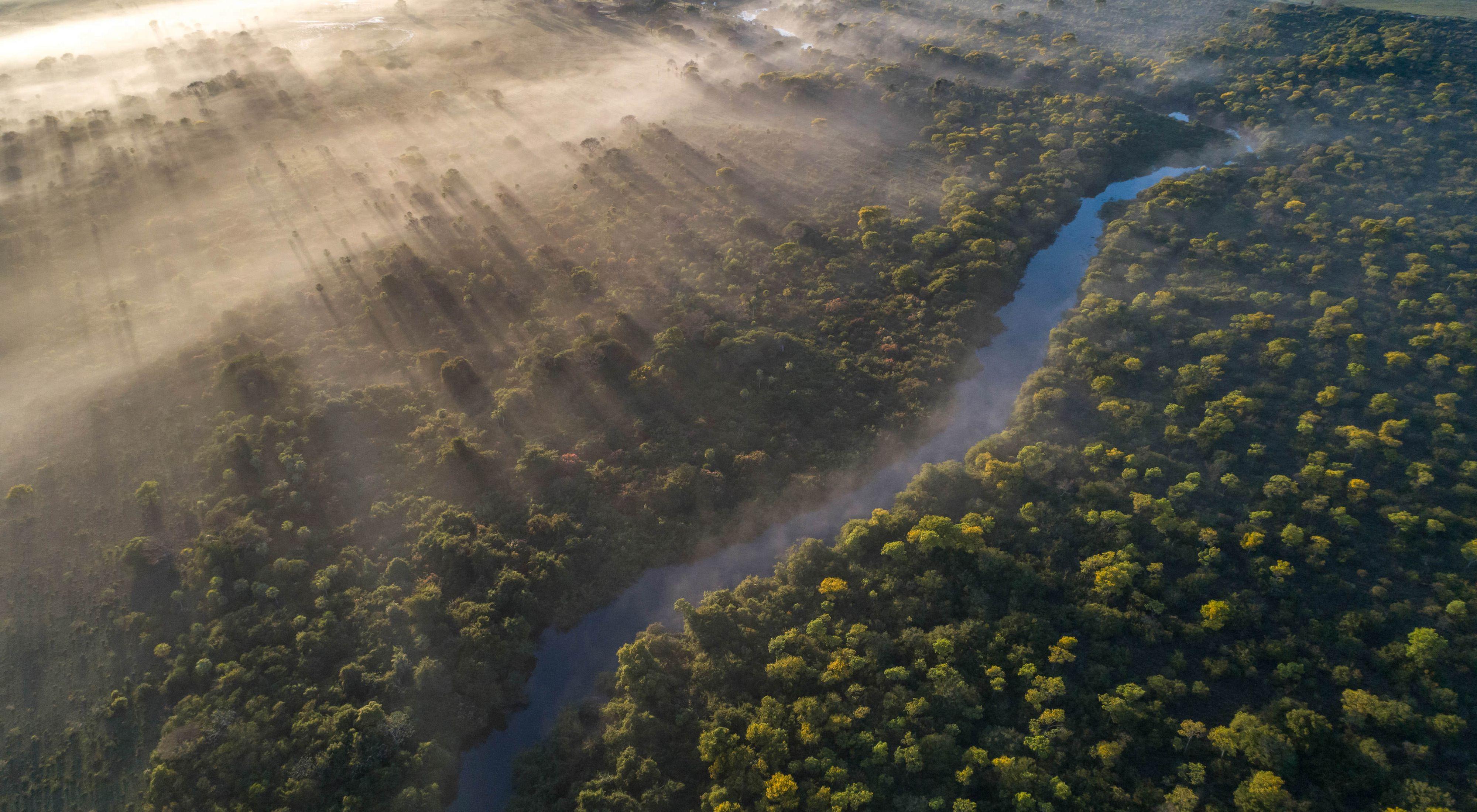 Margem de rio preservada no Pantanal.