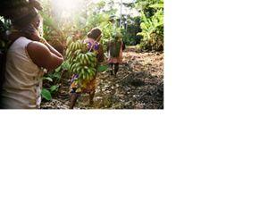 Mulheres Xikrin colhendo mamão e banana próximo a aldeia Pot-Kro, na Terra Indígena Trincheira-Bacajá, no Pará.
