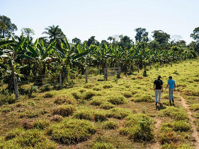 Produtor rural de São Félix do Xingu-PA, caminhando com seu filho em área de restauração utilizando cacau em sistemas agroflorestais.