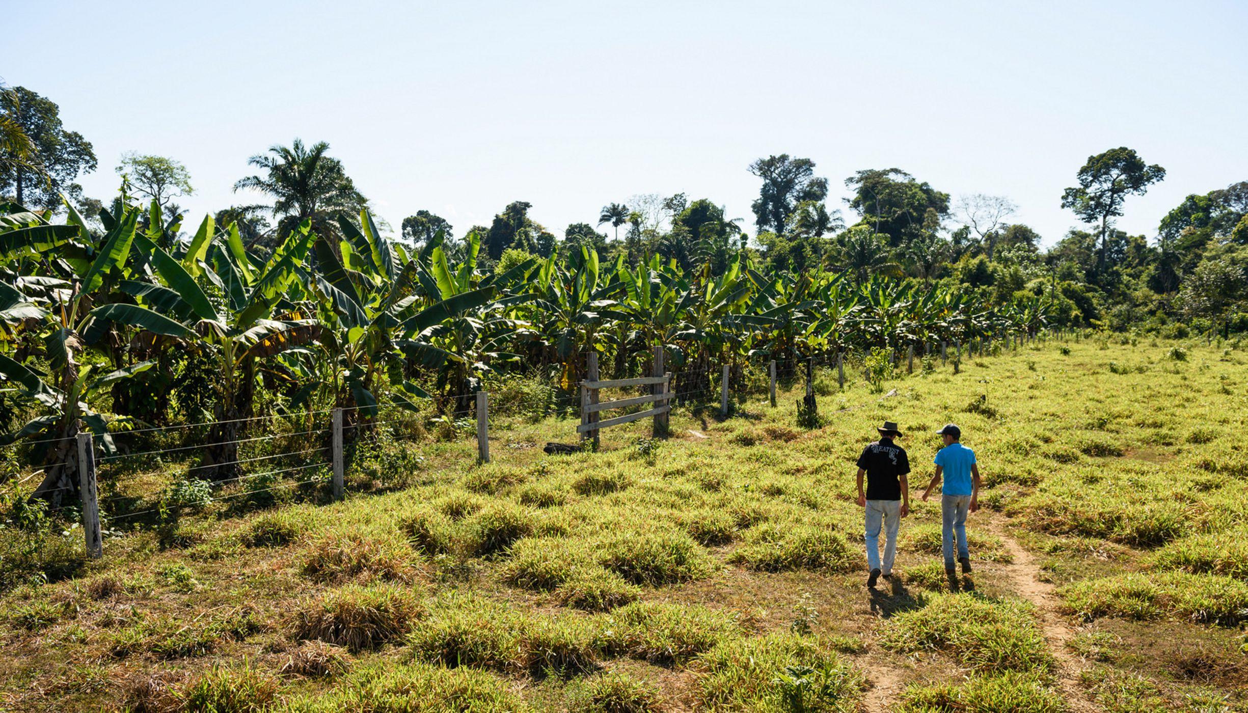 Los Pequeños Agricultores son Clave para Restaurar la Amazonia