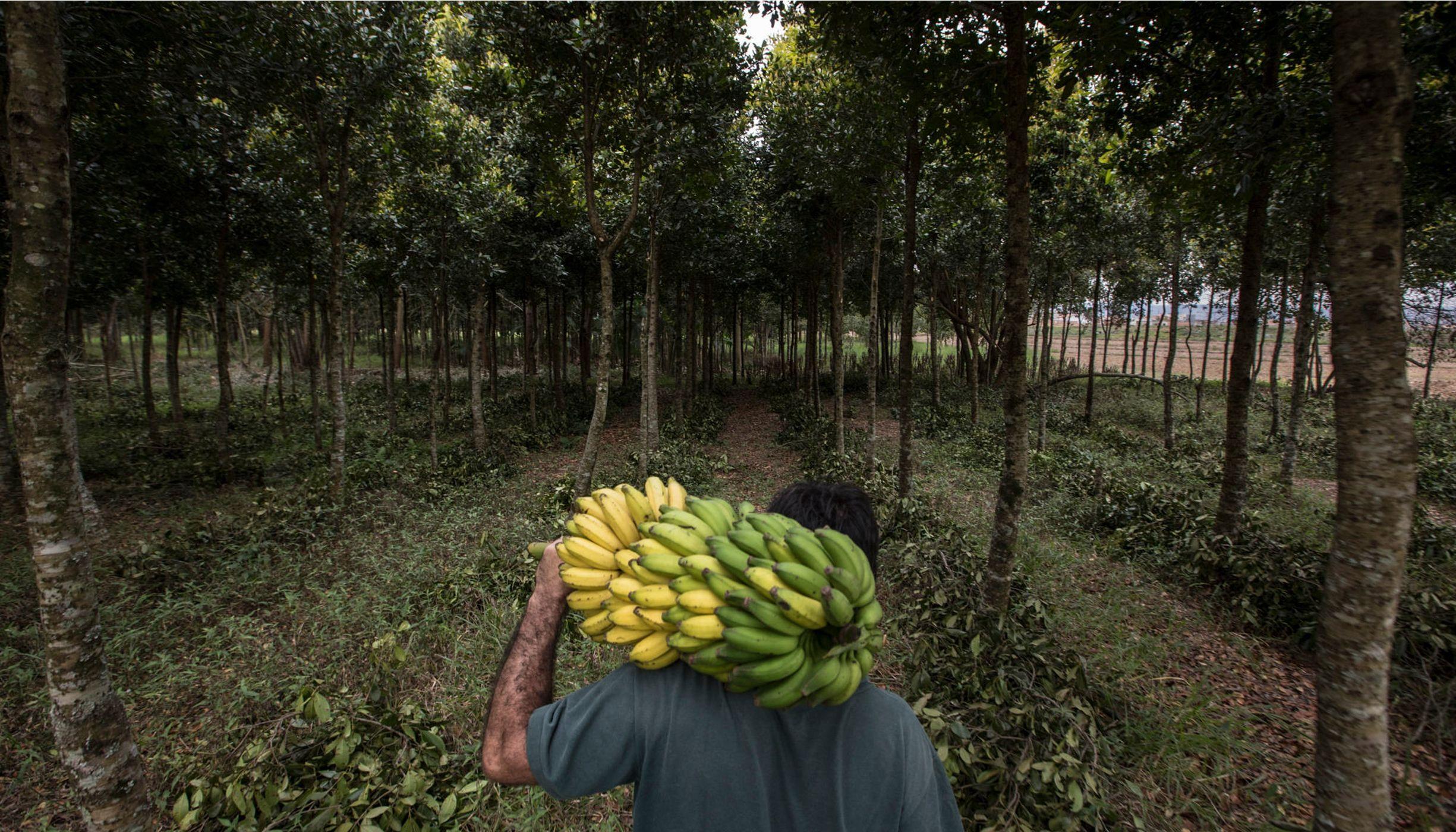 Patrick Assumpção, produtor rural de Pindamonhangaba-SP, investiu na produção em sistema agroflorestais, integrando árvores nativas da Mata Atlântica com espécies frutíferas.