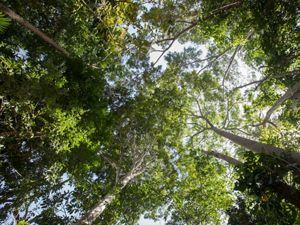 La Amazonía y la ambición climática