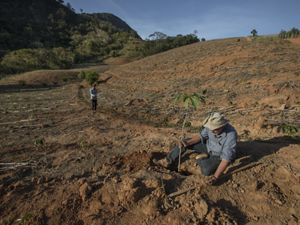 Agricultor plantando árvore em área aberta e preparada para produção.