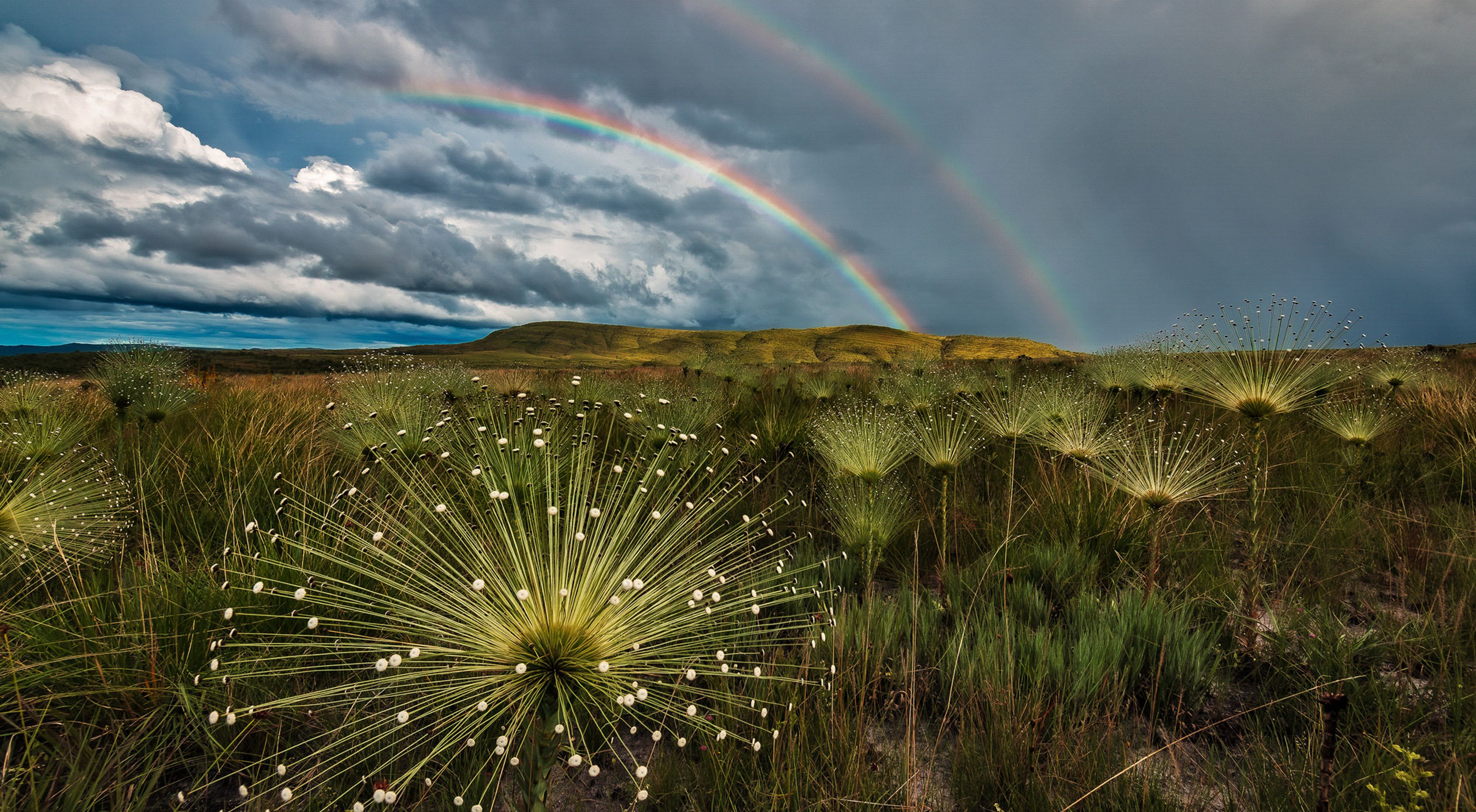 A close up of Cerrado grasslands with a view of hills and a double rainbow in the distance.