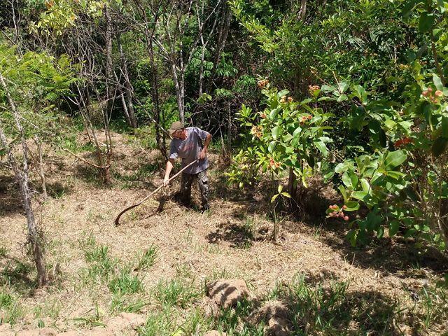 """O produtor Roberto """"Boy"""" trabalhando no Sítio Chão D`Água, em Salesópolis-SP."""