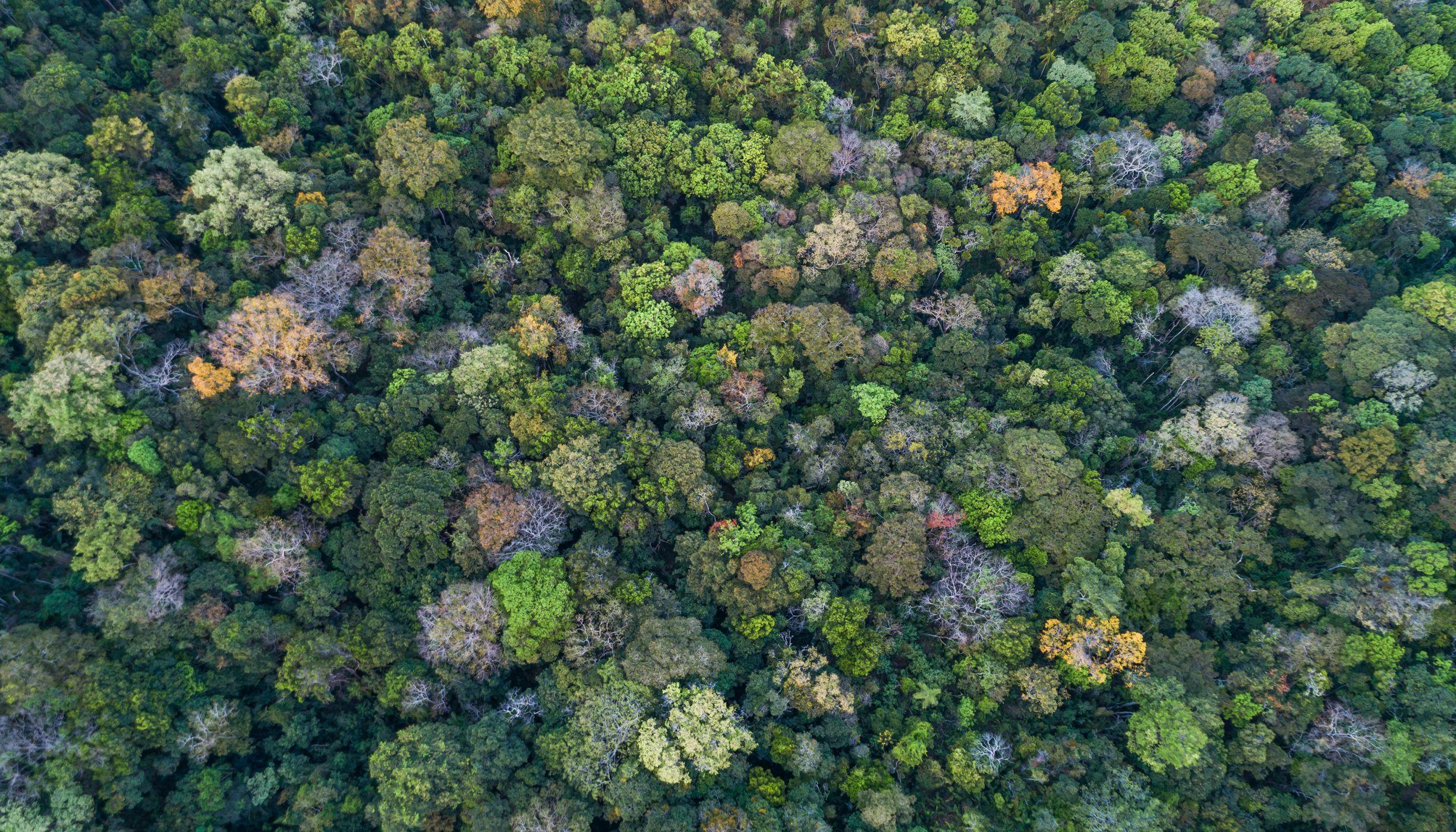 Visão aérea de vegetação nativa no Cerrado.