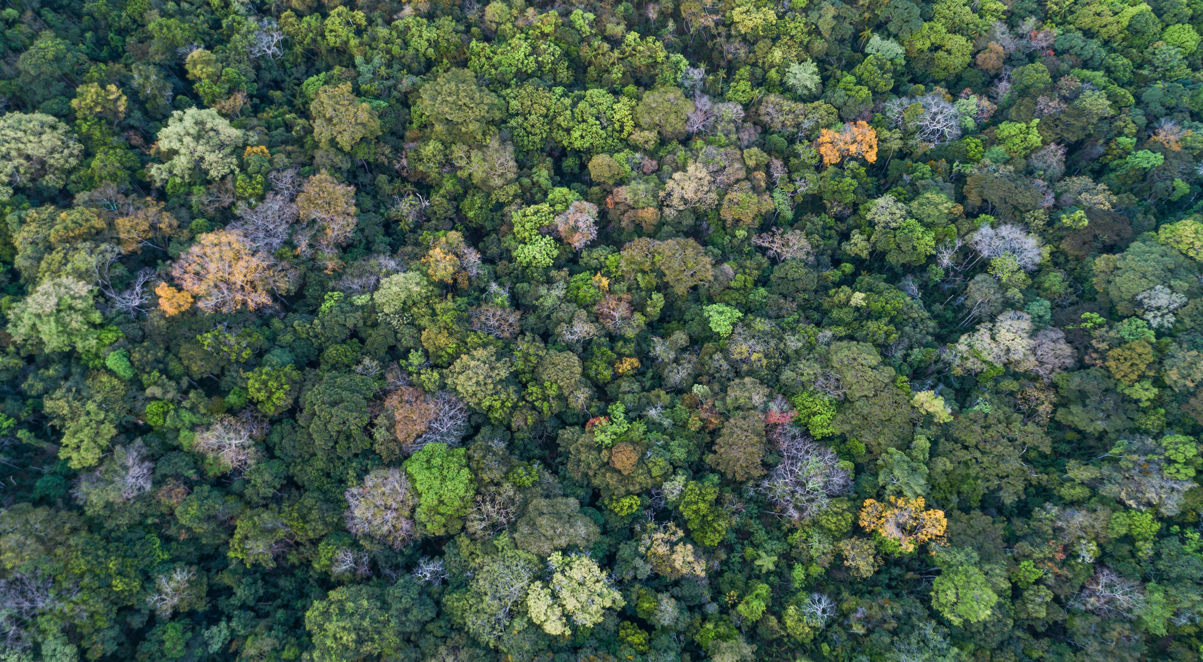 Vista aérea da vegetação de Cerradão na RPPN Mata Funda - Chapada dos Veadeiros, em Alto Paraíso-GO.