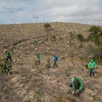 Equipe realizando manutenção de área restaurada em torno de uma nascente em pasto degradado de Salesópolis-SP.