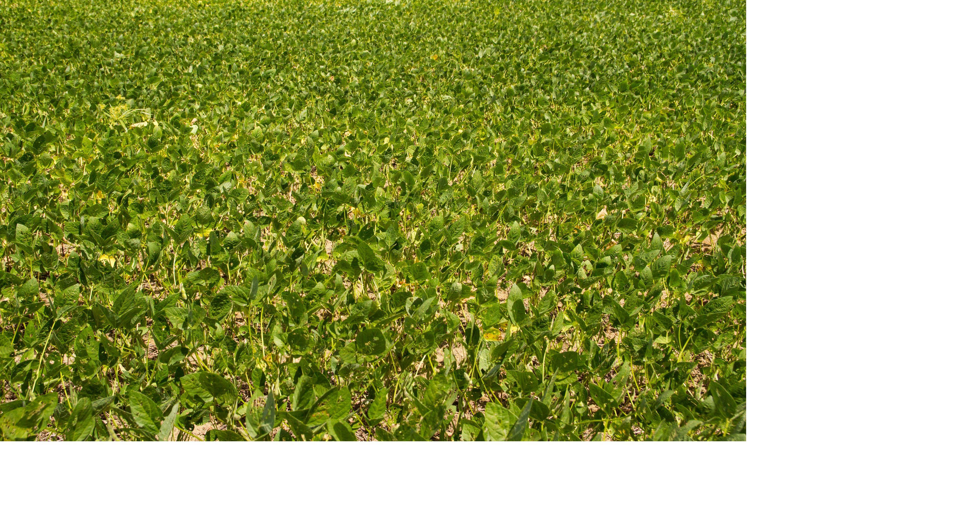 Plantação de Soja em Santarém - PA