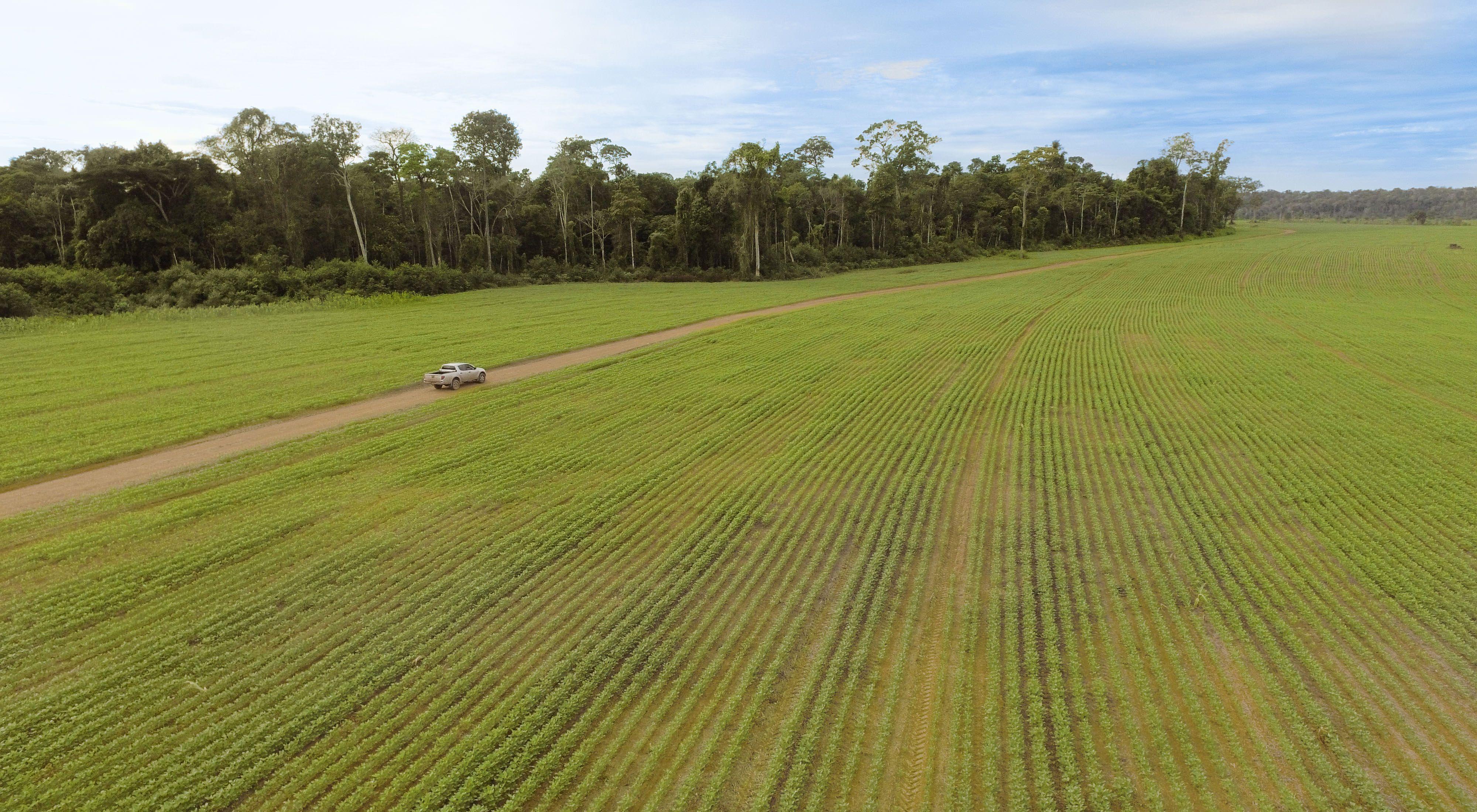 Imagem aérea de plantação de soja e área de preservação permanente no município de Belterra, no oeste Pará.