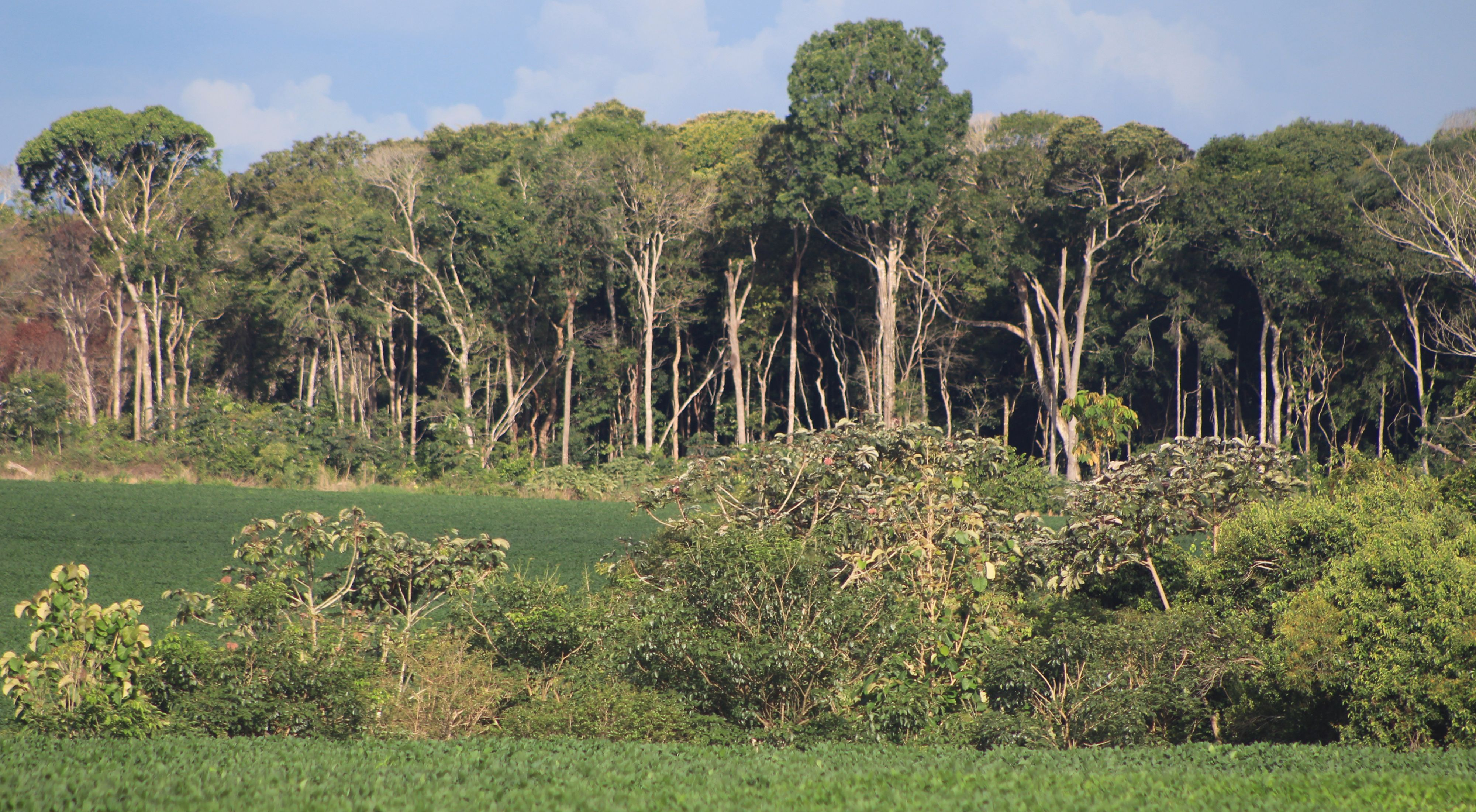 Área de produção de soja em propriedade rural do Mato Grosso, com vegetação nativa conservada ao fundo.