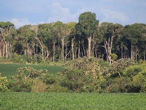 Área de produção de soja com vegetação nativa em segundo plano