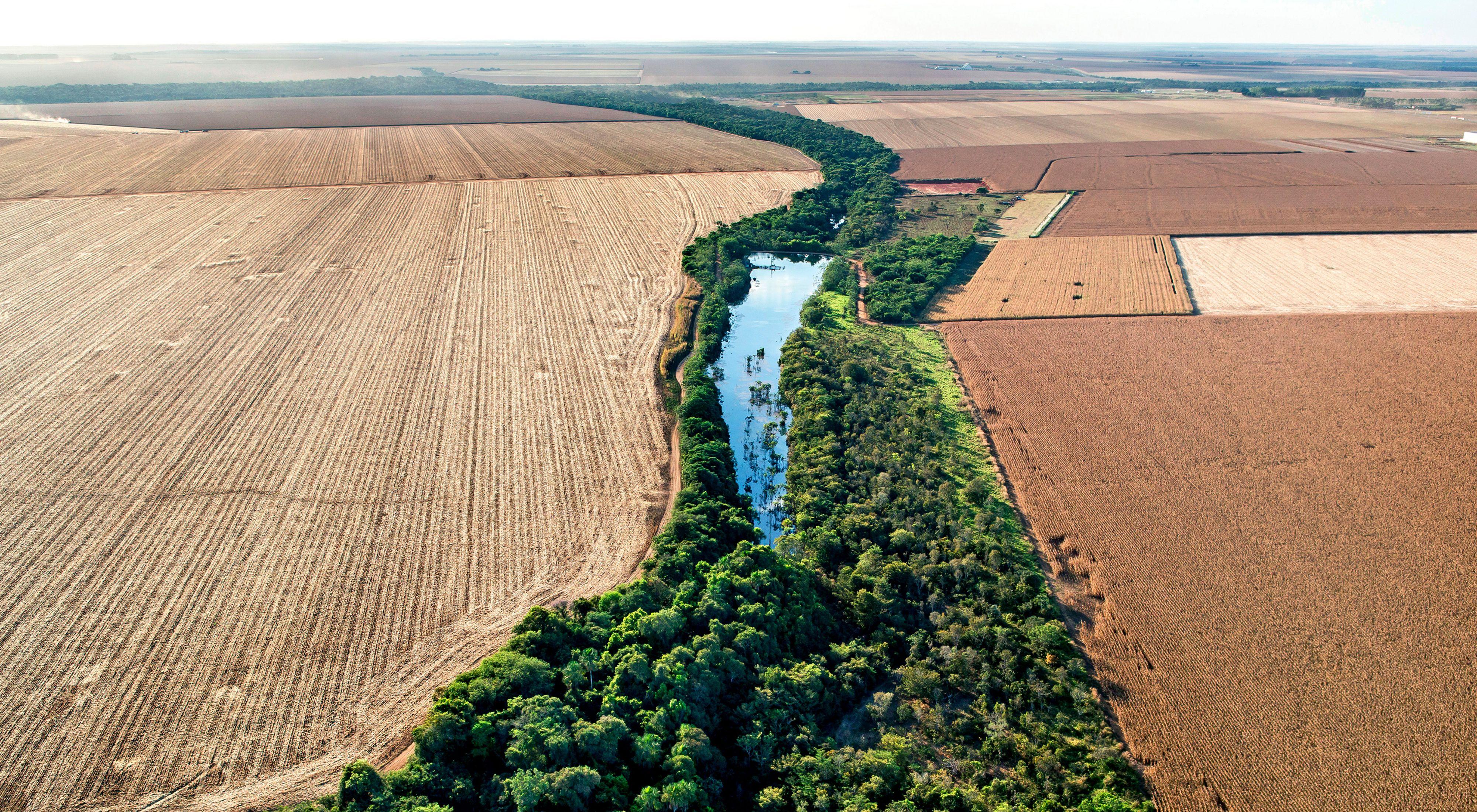 Área protegida em margem de curso de água entre duas propriedades rurais de Lucas do Rio Verde-MT.