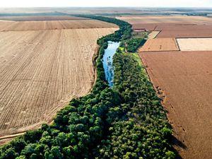 Imagem aérea de plantação de Área de Preservação Permanente em uma propriedade rural de plantação de soja.