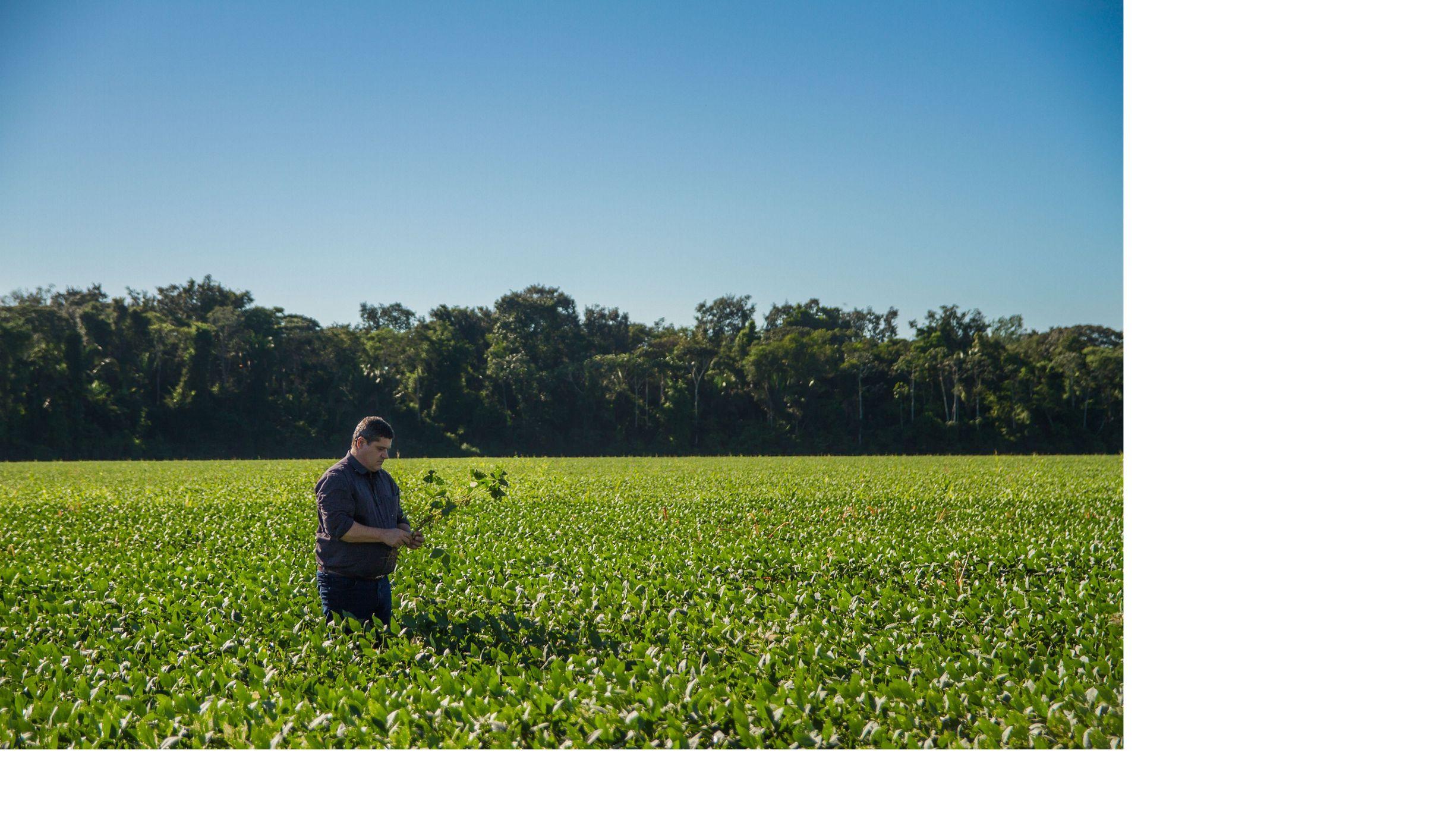 Pio Stefanello, produtor parceiro da TNC em um campo de soja em Santarém, Pará.