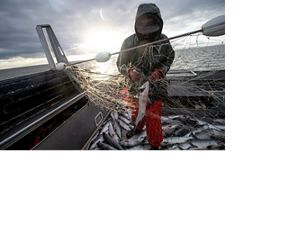 Bristol Bay salmon fishing