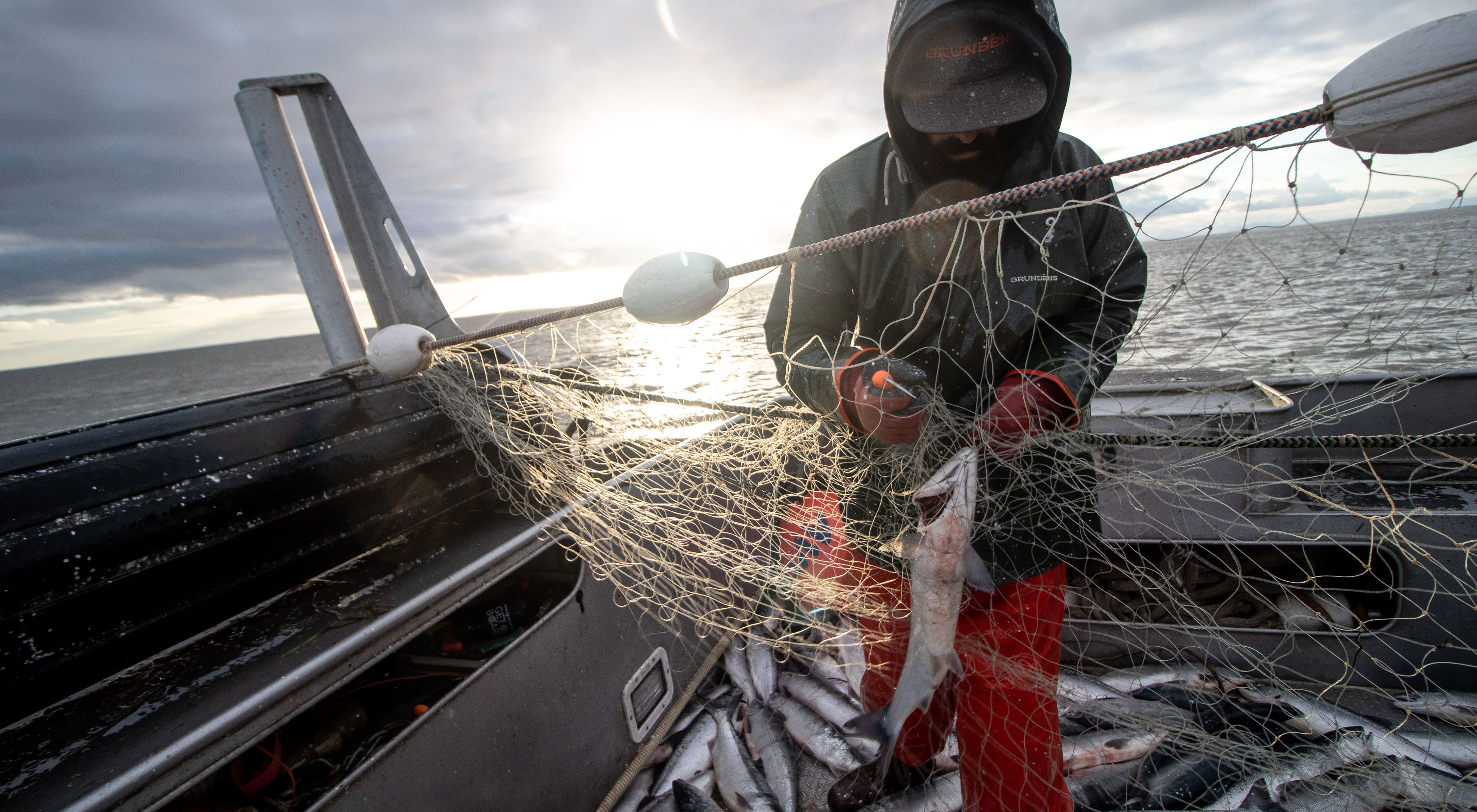 Commercial fishing at the height of the wild sockeye run in Alaska's Bristol Bay.