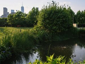Wetlands in Brooklyn Bridge Park
