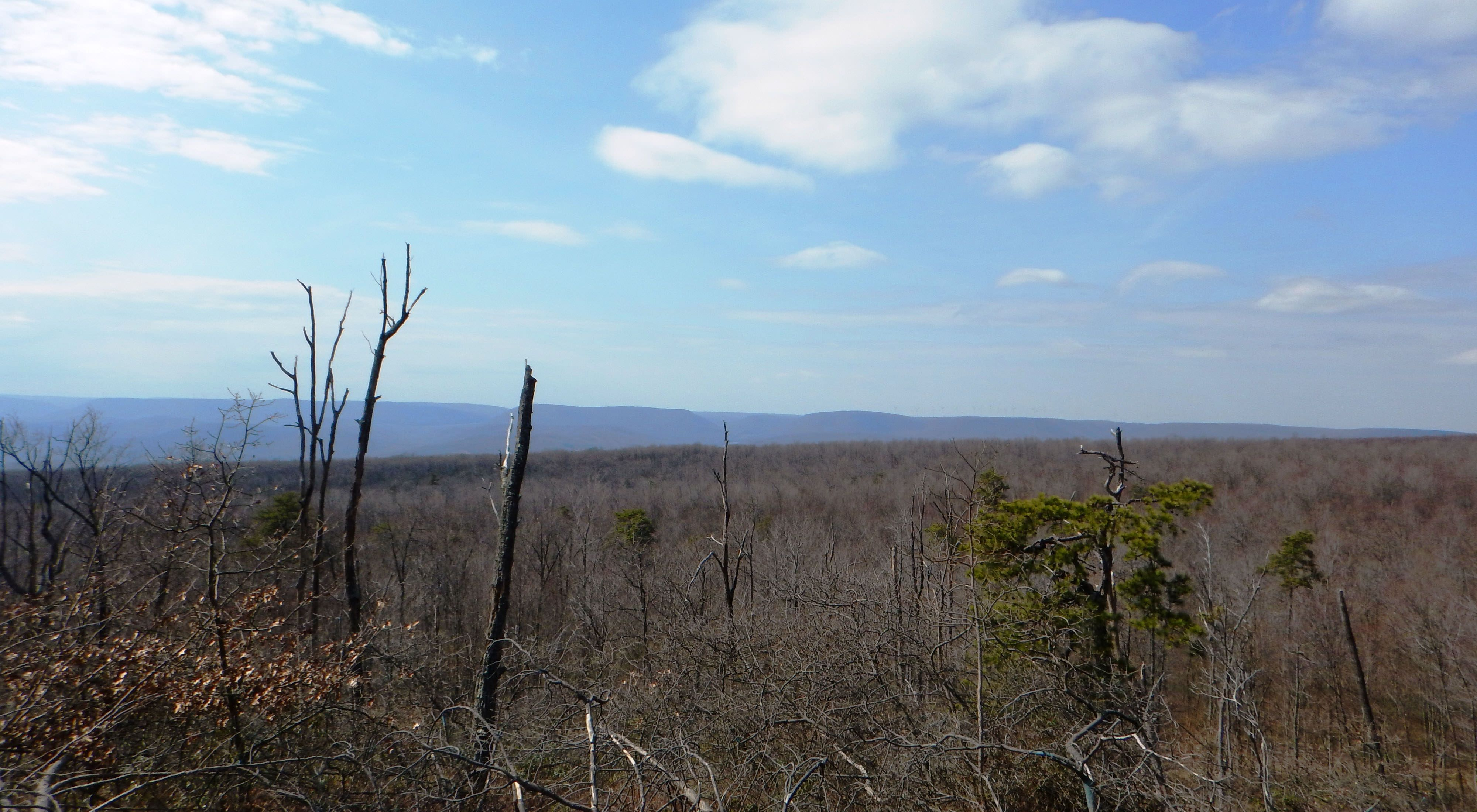 The bare tops of leafless trees in the foreground of a view that looks out over the top of a mountain to another mountain ridge in the far distance along the horizon.