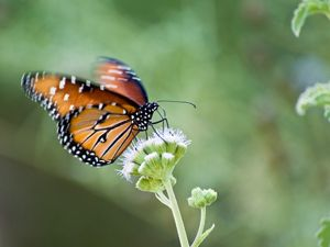 A butterfly prepares to take flight in a park in Arizona.