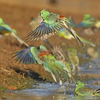 Colorful parrots flying away from a body of water