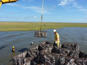 Oyster reef construction in Calcasieu Lake