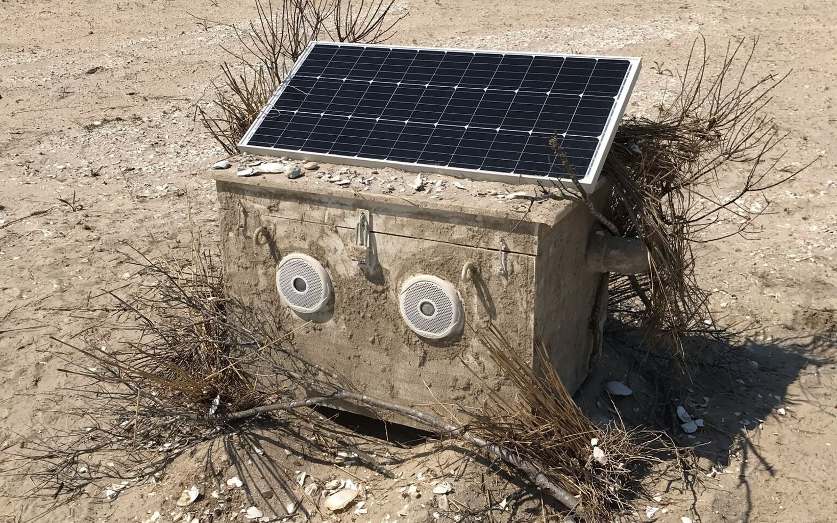 This custom, solar-powered box emits piping plover calls, to lure the birds to nest in the protected area.