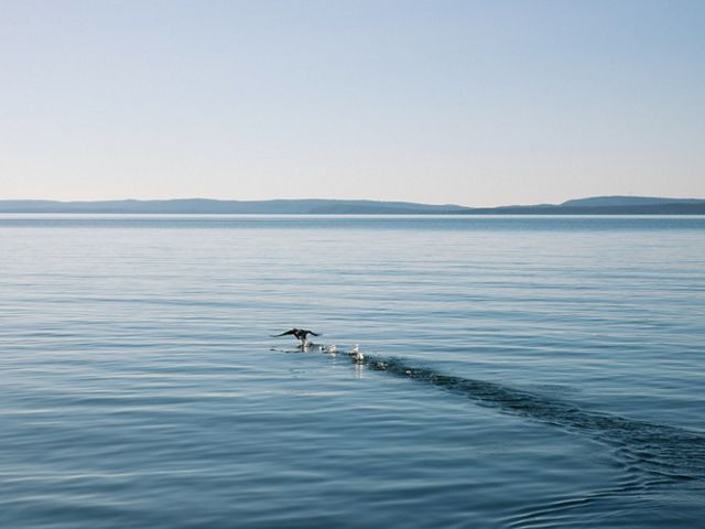 a bird skirting above calm, blue water with hills in the distance.