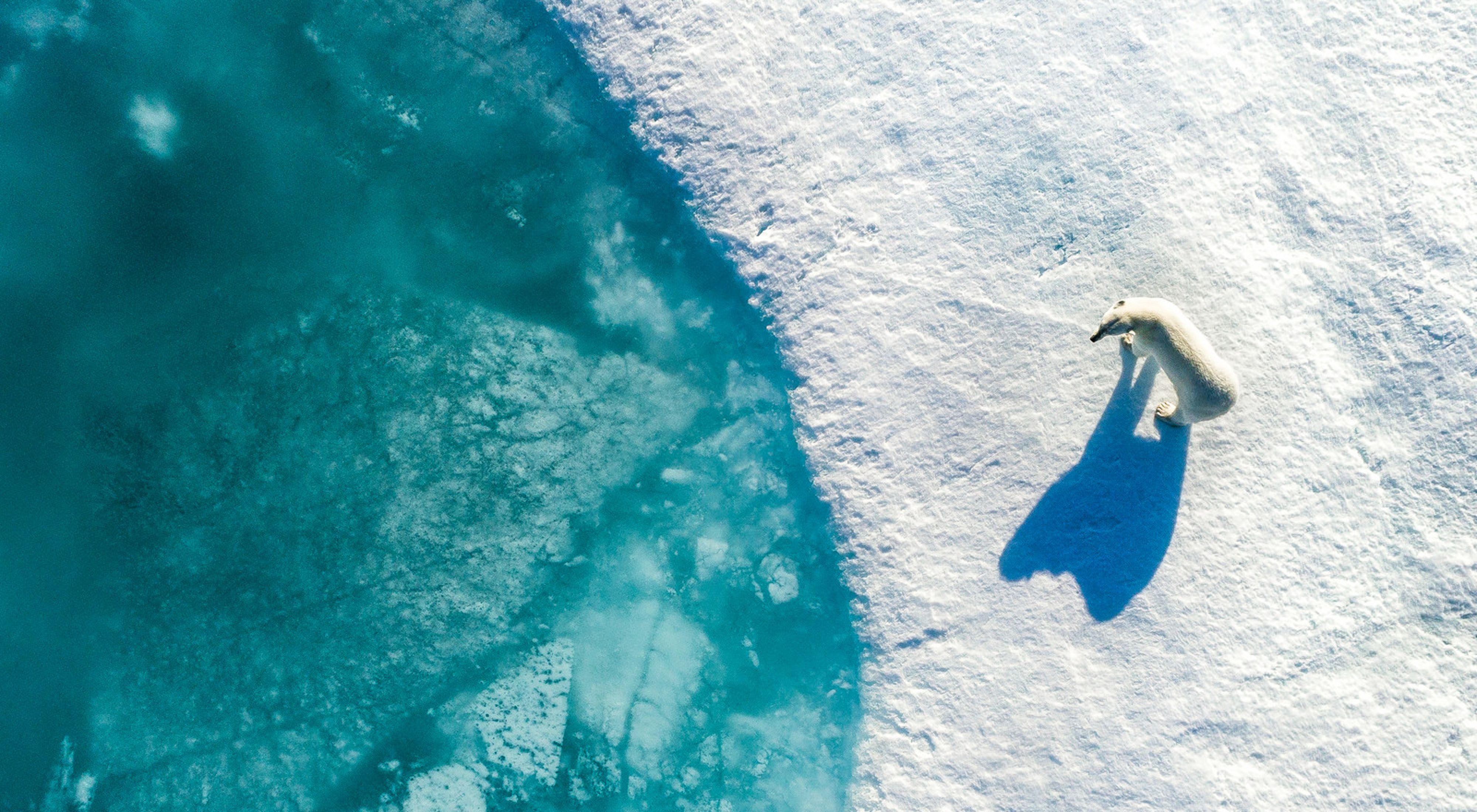 A polar bear drifting on sea ice in the Tremblay Sound, Canada