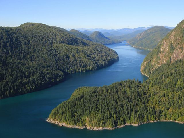 Aerial of spruce and cedar forest along a river bend in Clayoquot Sound.
