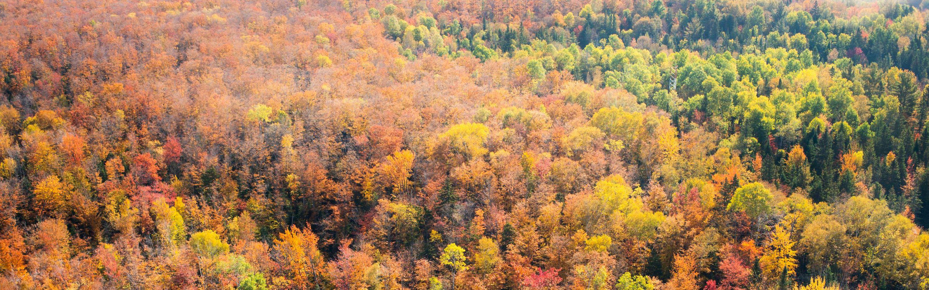 这是世界上现存最大的完整森林之一,温带混合森林支持针叶树和阔叶树的结合。